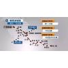 明确了!深圳将建设5条城际铁路,项目总长约410公里!
