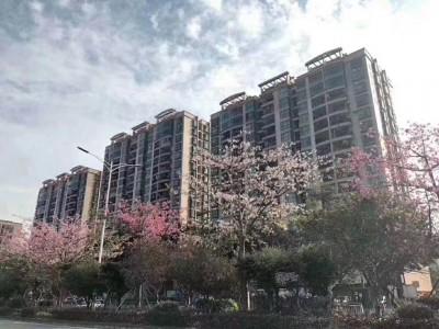 宝安沙井新城市广场村委统建楼二手房出售